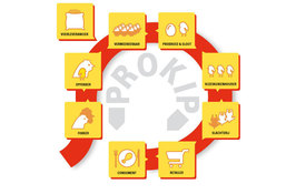 ProBroed-Infographic-Ketenmodel-rond.jpg
